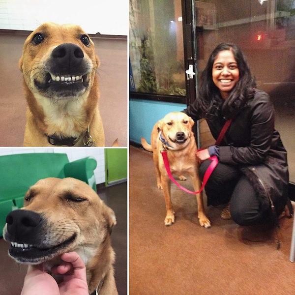 cachorro-sorriso-adocao-01