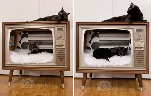 casa-gato-criativa-5