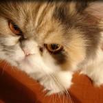 Como lidar com gatos agressivos