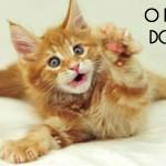 O que é ser um gato?