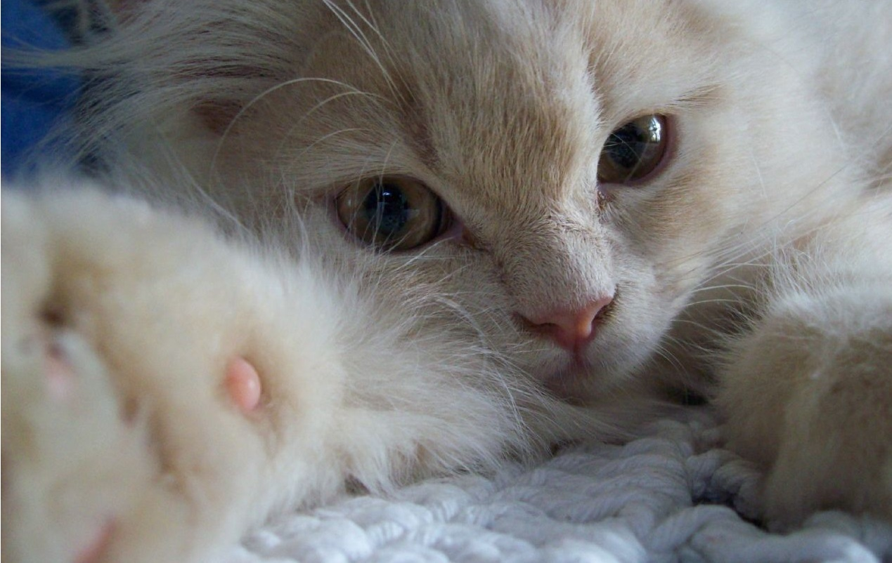 gatos (1)