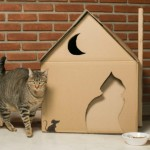 10 casas criativas para fazer para o seu gato