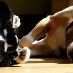 Defenda seu animal dessas 5 pragas de verão