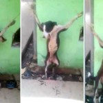 Vídeo chocante mostra cão sendo crucificado