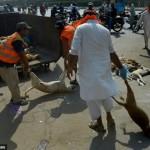 Dezenas de cães são mortos para reduzir número de animais nas ruas
