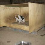 Ativistas visitam 'fábrica de filhotes', confira o que eles encontraram