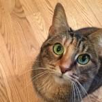 7 segredos que seu gato não vai te contar