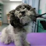 Homem tosa cães abandonados e dá uma nova chance de vida a eles