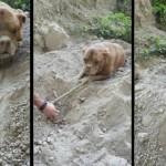 Homem sai para passear com cão e encontra cachorro enterrado vivo