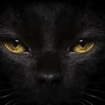 13 curiosidades sobre os gatos