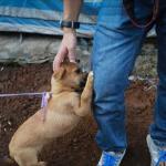 Filhote de cão pede carinho antes de ser morto e consumido em festival chinês