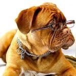 7 coisas que você não sabe sobre seu cachorro