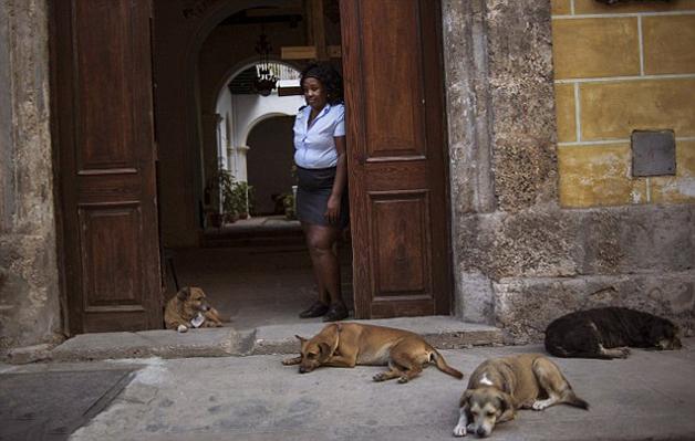 CubaStreetDogs6