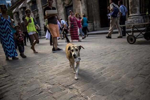 CubaStreetDogs8