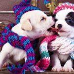 Aqueça seu cão no inverno