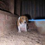 Mãe em uma 'fábrica de filhotes' esconde seus filhotes dentro da parede