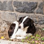 3 comportamentos que levam ao abandono de animais