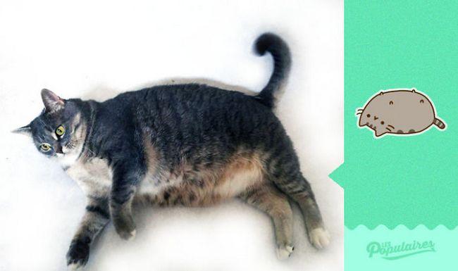 gato-recria-emoji-12