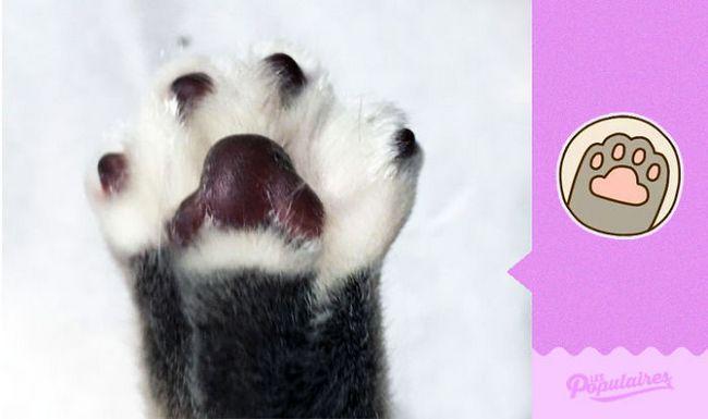 gato-recria-emoji-2