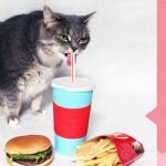 Confira os stickers do Facebook feitos com um gato de verdade