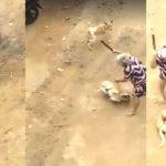 Vídeo chocante mostra idosa espancando cachorro a pauladas