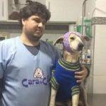 Vídeo mostra recuperação de cachorro agredido por idosa