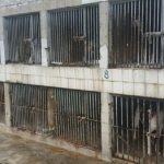Ministério Público determina retirada de animais do Canil Municipal de Cubatão