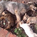 Animais de ONG são envenenados durante a madrugada