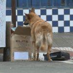 Sacrifício de animais é aprovado por vereadores da cidade de Quaraí, no Rio Grande do Sul