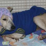 Saem resultados dos exames de cachorro espancado por idosa em Cachoeiro