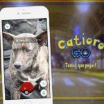 Prefeitura de Esteio cria campanha Catioro Go! para estimular adoção de cães abandonados