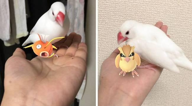 Pokemon-Animais-19