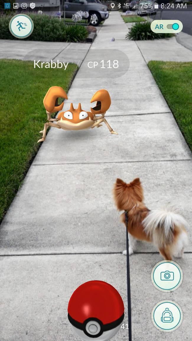 Pokemon-Animais-22