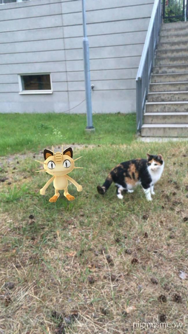 Pokemon-Animais-5