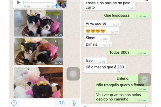 brasil-fraude-venda-caes-sorocaba-20160804-002