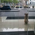 Aeromoça adota cão que sempre a esperou do lado de fora do hotel