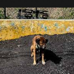 Crise econômica na Venezuela faz donos abandonarem seus animais