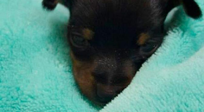 Site Vista-se cria ofício para proibir venda de animais na OLX