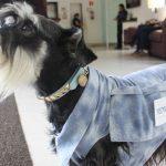 Morre cão que consolava famílias durante velórios em Santos