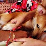 Mulher desiste de casar após descobrir que noivo não gosta de cachorros