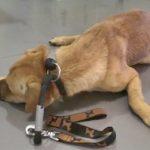 Cão é tão maltratado que tem pavor de humanos