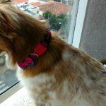 Pet shop recusa vira-lata, segundo relato do dono em rede social