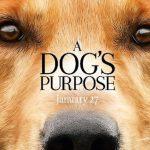 Apesar de polêmica, 'Quatro Vidas de um Cachorro' tem 2º maior bilheteria