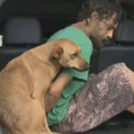 Fotos mostram como os cães são fiéis
