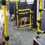 Motorista de ônibus 'dá carona' para cães durante temporal