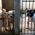 Câmara aprova projeto que proíbe sacrifício de cães e gatos sadios no País