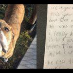 Criança escreve carta aos novos donos de seu cão