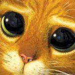 Como os gatos conquistaram os humanos