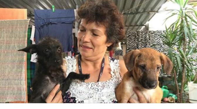 Com 80 animais em casa, protetora resgata cães e gatos abandonados na Cracolândia