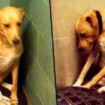 A cadela mais triste do mundo está sem casa mais uma vez